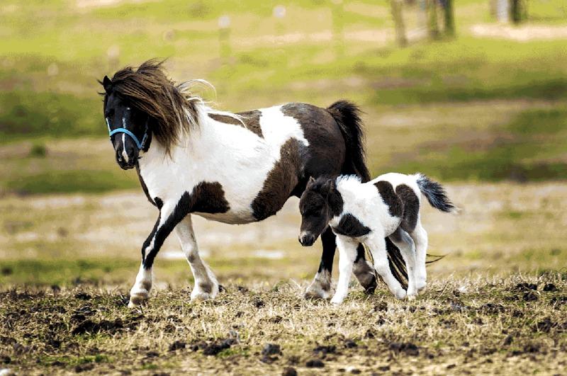 Banks Miniature Horse Farm in Clayton, NC.